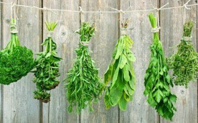 Les fines herbes subliment vos préparations